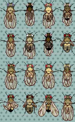 Giant drosophila mutants
