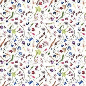 bohemian meadow