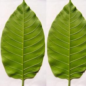 leaf035back-ed-ed-ed-ed