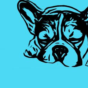 Bulldog Nele Bolzplatzrocker türkis