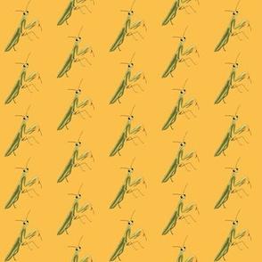 Mantis on Yellow
