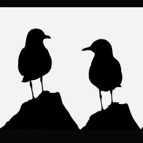 bird_seaguls_oz