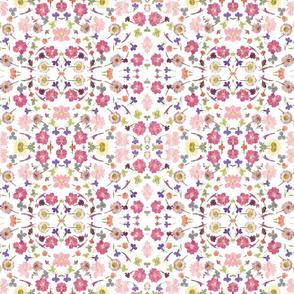 Pink Larkspur