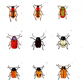 Animal-Insect-Orange-bugs-with-spots-ed