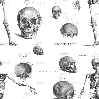 Antique Skeleton Anatomy