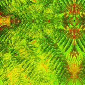 Native Ferns