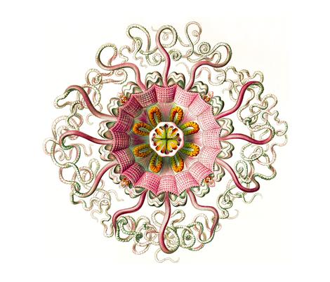 Jellyfish Nature Artform fabric by beckyhayes on Spoonflower - custom fabric