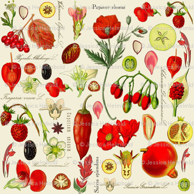 Red Botanical Drawing Images