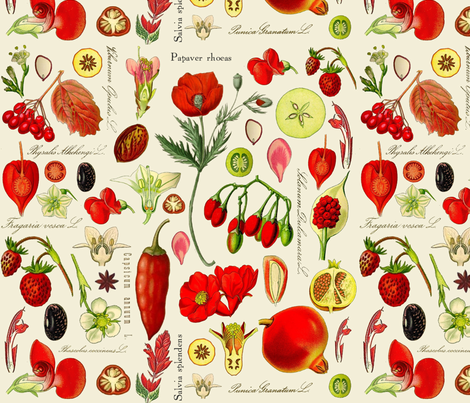 Red Botanical Drawing Images fabric by elaraophelia on Spoonflower - custom fabric