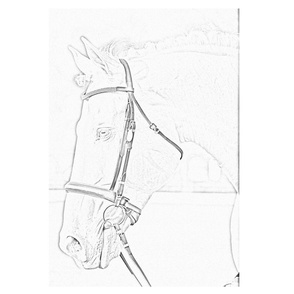 pencil sketch of Horse with bridle pillow square