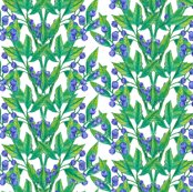 Berries_cover_small_shop_thumb
