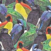Birds_birds_birds_shop_thumb