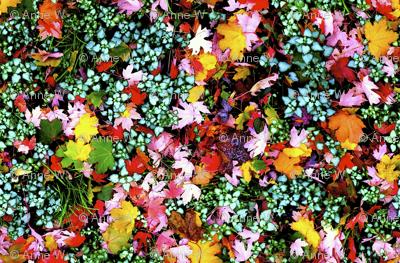 Autumn foliage by K. Steinmann