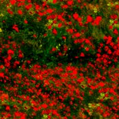 Rrmonet_poppies_only_dark_red_green_shop_thumb