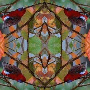 Rosella_feeding_in_Autumn