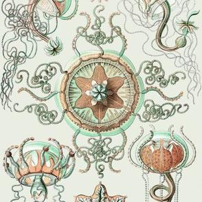 Haeckel Trachomedusae Jellyfish