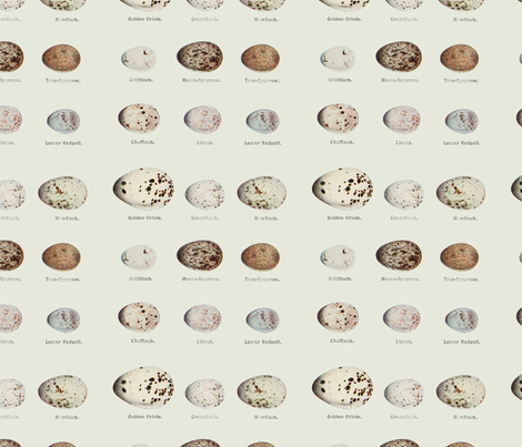 Birds Eggs  fabric by flowerscapes on Spoonflower - custom fabric