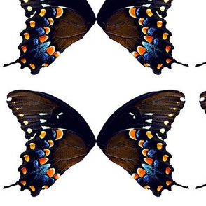 Butterfly Mob
