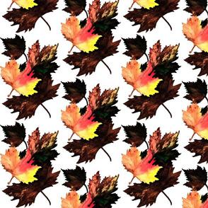 Maple_Leaf_Darkened