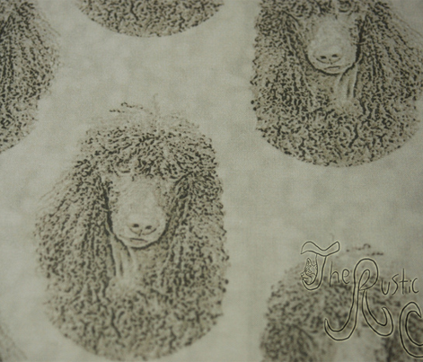 Irish Water Spaniel faces - tan