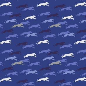Whippet blue