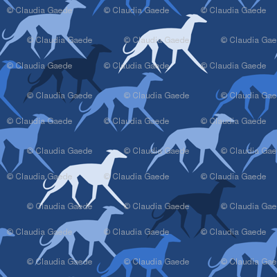 Sighthounds blue