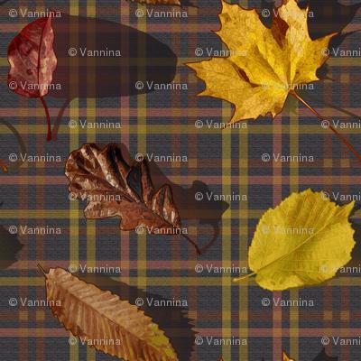 Leaves and Tartan