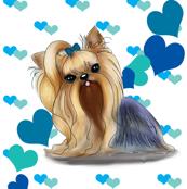 Yorkie Blue hearts