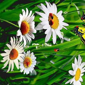 White_daisies