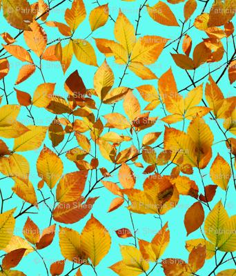 Maine Autumn Leaves