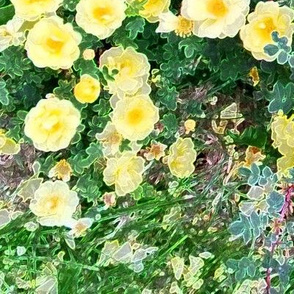Bright Yellow Rose Garden