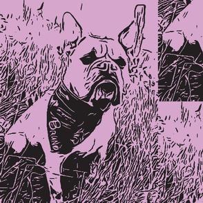 Bolzplatzrocker_Bulldog_Bruno lila