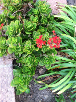 Succulents and red flowers
