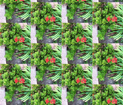 Succulents and red flowers fabric by rcr on Spoonflower - custom fabric