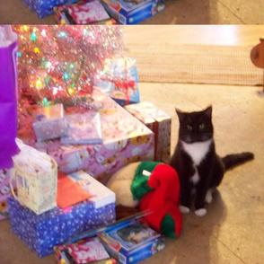 Christmas Slyvester