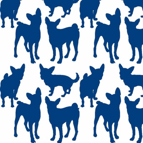 Happy chihuahuas