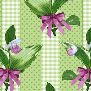 Showy Lady Slipper Green Stripes
