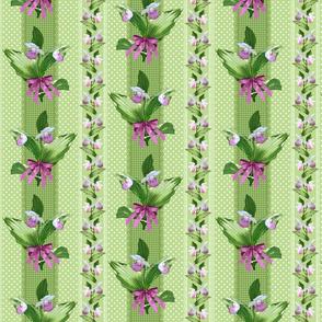 Showy Lady Slipper Elaborate Green Stripes