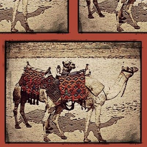Camels in Giza