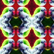 Parrot portraits