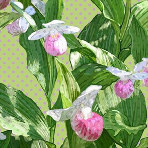 Showy Lady's Slipper - Light