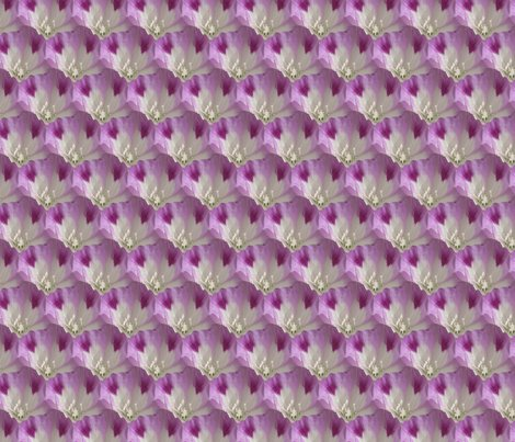 Clarkia_williamsonii_tile_alternating_rows-small-higher_res_shop_preview