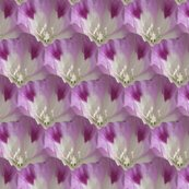 Clarkia_williamsonii_tile_alternating_rows-small-higher_res_shop_thumb