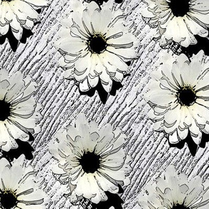 Near Black and White Daisies