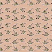 Hummingbird sketch