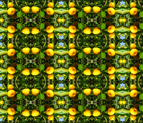 Citrus grid fabric by aliquilts on Spoonflower - custom fabric