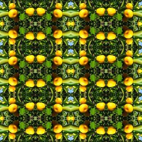 Citrus grid