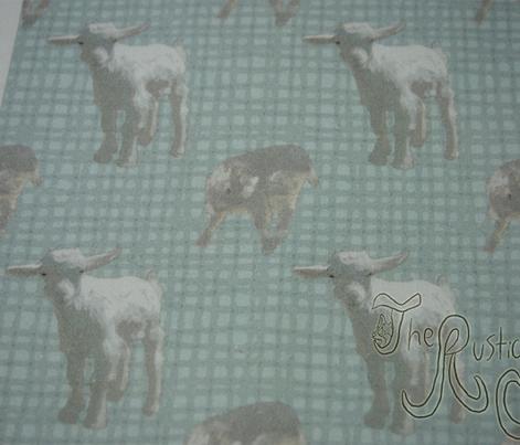 Pygmy goat babies - blue
