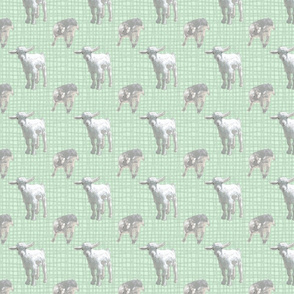 Pygmy goat babies - green