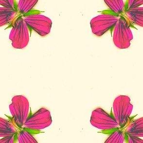 Blume-ed